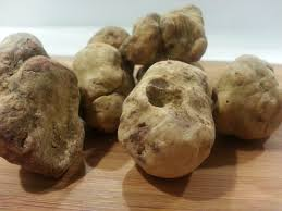 italian white truffle fresh italian white truffles tuber magnatum pico 1 oz