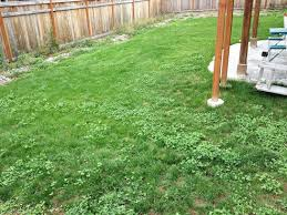 bad grass landscaping contractor talk