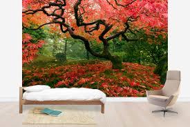 japanese maple tree wall mural photo wallpaper photowall