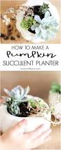 easy to make fall decorations how to make fall succulent planters pumpkin vase fall decor and