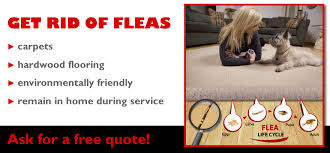 Backyard Flea Treatment by Fleabusters Rx For Fleas Of Atlanta Fleabusters Rx For Fleas Of