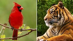 week 11 nfl picks mascot edition bengals cardinals a bloody