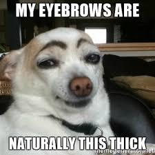 Bushy Eyebrows Meme - thick eyebrows memes memes pics 2018