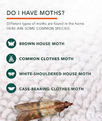 clothes moths facts how to get rid of moths