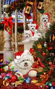 285 best bichon frise images on pinterest bichon frise bichons