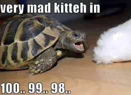 Ermahgerd Animal Memes - animals are awesome funny animal pictures 22 pics kill the hydra