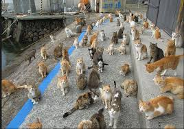 cat island tourists flock to japan u0027s cat island in record numbers life with