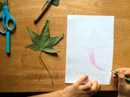 tree identification for kids my leaf book sturdy for common things