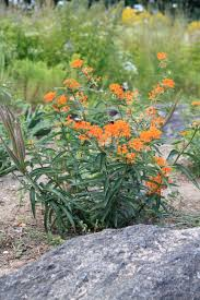 native drought tolerant plants drought tolerant plants for sun new moon nursery