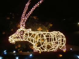 Phoenix Zoo Christmas Lights by Echoes Of The Southwest 2015