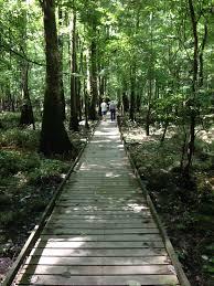 South Carolina national parks images File congaree national park south carolina boardwalk vertical jpg jpg