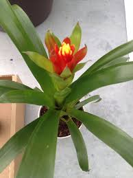 plant options utah living creations