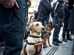 vapor explosive sniffing dogs help protect the thanksgiving