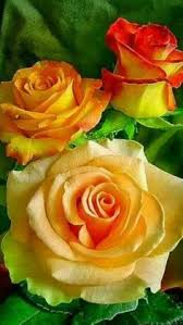 roses colors pin by yrasel ramirez on flowers flowers beautiful
