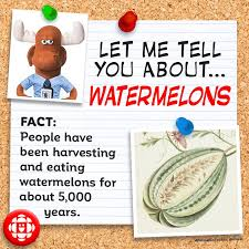 5 facts about watermelons explore awesome activities