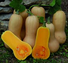 heirloom waltham butternut winter squash 10g 100 seeds 2 35