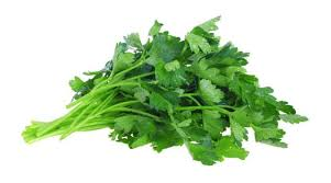 bitter herbs on seder plate vexing question of celery vs parsley on the seder plate the forward