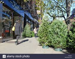 vendors selling trees on the streets of new york stock