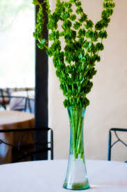 single stem vases tall centerpiece of whimsical green bells of ireland in a recycled