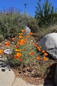 native plants san diego committee meetings u2014 cnps san diego