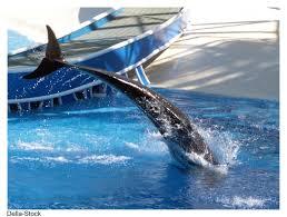 longfellows whale tales cedarland