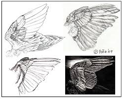 wing studies by reptangle on deviantart