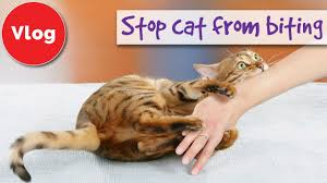 Why Does My Cat Sleep On My Bed How To Stop Your Cat From Biting You Youtube