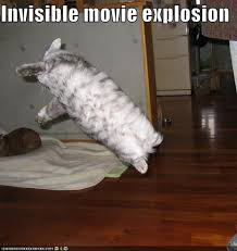 Invisible Cat Memes - the 17 best invisible cat pictures