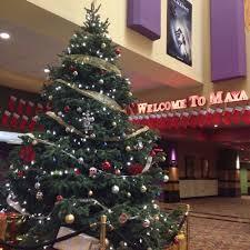 jenkinson u0026 sala family christmas trees 28 photos christmas