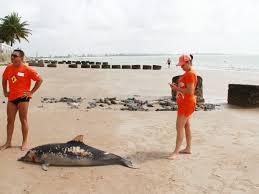 Golfinho é encontrado morto na praia do Bessa, em João Pessoa (PB)