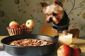 thanksgiving foods ok to feed to pets the trupanion