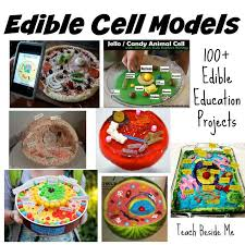 edible images best 25 edible animal cell ideas on animal cell