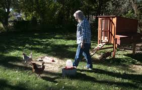 Chickens In The Backyard by Ogden Couple Fighting City To Keep Backyard Chickens The Salt