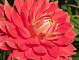 76 best flower names images on pinterest exotic flowers