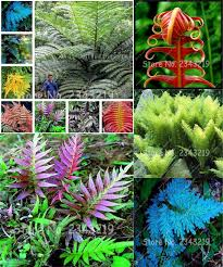 visit to buy selling flower fern seeds vines climbing