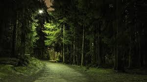 nature trees forest green branch path lights landscape