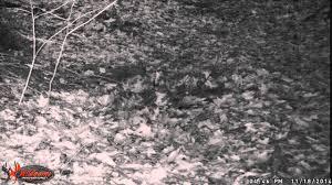 wildgame innovations lights out camera comparison wgi 8mp buck commander nano lightsout trail