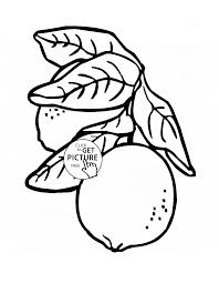 lemons with leaves fruit coloring page for kids fruits coloring