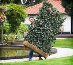 Privacy Garden Ideas Diy Backyard Ideas Turning Metal Wire Into Beautiful Garden