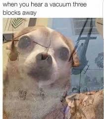 Animal Meme - funny animal memes are the best craveonline