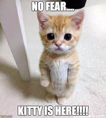 Fear Meme - cute cat meme imgflip