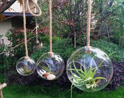 air plant planter holder teardrop plant terrarium 4 inch