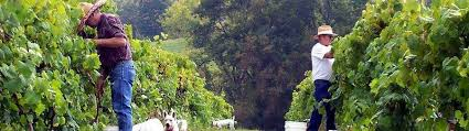 Pedretti Party Barn Vernon Vineyards Viroqua Wi Wine Vineyard La Crosse Winery