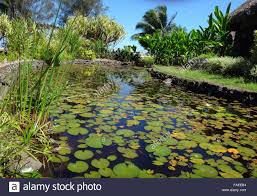 ornamental fish pond of jardins de pa ofa i garden of paofai in