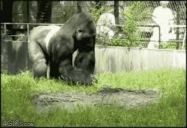 Gorilla Warfare Meme - gorilla warfare gif on imgur