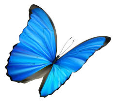 blue butterfly free download clip art free clip art on