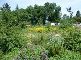 nw native plants learning garden at jenkins estate washington county master