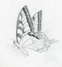 how to make a quick butterfly sketch with pencil butterflies