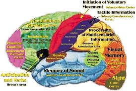 we can help execu sensory neuropedagogy educational