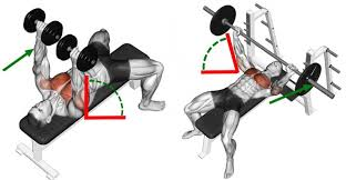 Bench Press For Size Dumbbell Press Vs Barbell Press For Chest Size And Strength